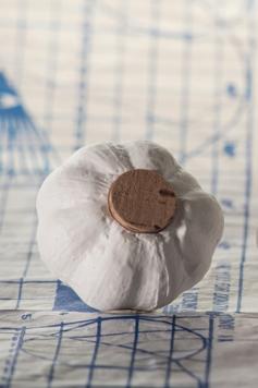 Salz- oder Pfefferstreuer - Garlic
